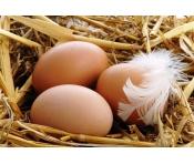 Яйца куриные (деревенские)