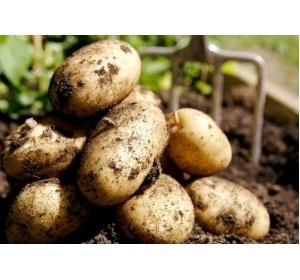 Картофель деревенский от Фермера