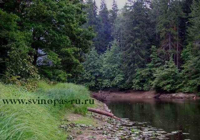 Река Бужа, свежая рыба