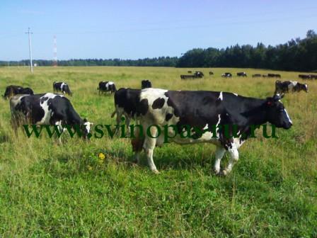 Экологически чистые деревенские продукты